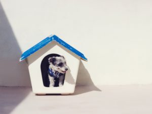 dog-in-doghouse-homeowners insurance - noah insurance group